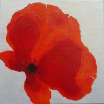 "12""x12"" Poppy Slides (IV)"